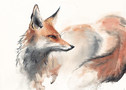 Red Fox - 42X30cm print