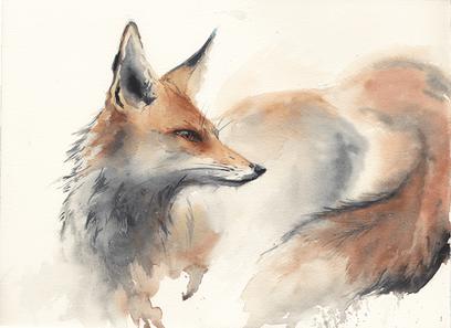 Red Fox (Winter Coat)