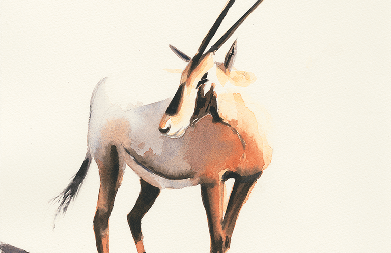 Arabian Ory