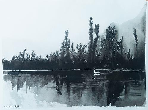 ברבור דיו Ink swan