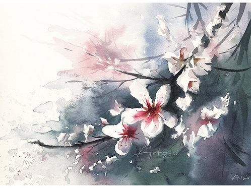 פריחת השקד - הדפס גדול Almond blossom - a large print