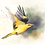 Thumbnail: זהבן מחלל Golden oriole