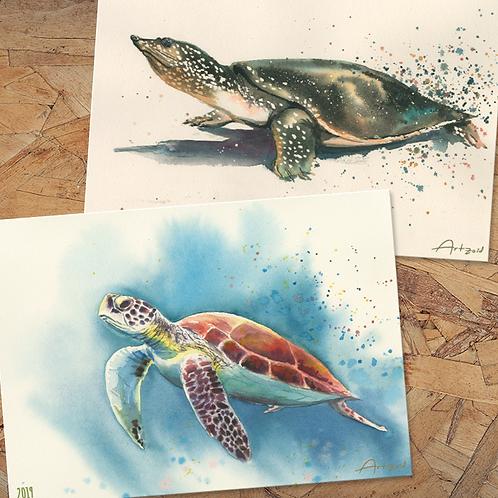 Turtles - 18X13 cm prints