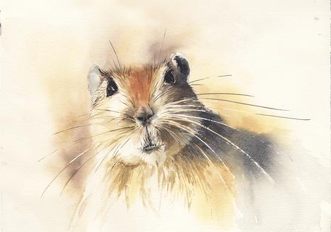 Pasmun - Fat Sand Rat