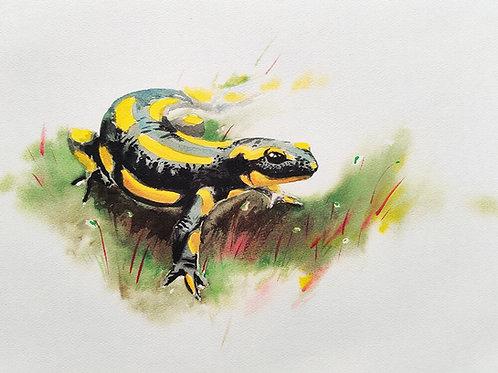 סלמנדרה - הדפס גדול Fire salamander - large print