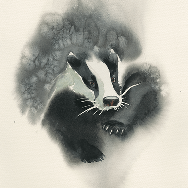 Common Badger
