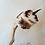 Thumbnail: צלוי Roasted