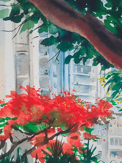 ORIGINAL WATERCOLOR - Flamboyant Bloom in Tel Aviv