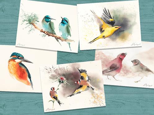 Birds of Israel - 18X13 cm print