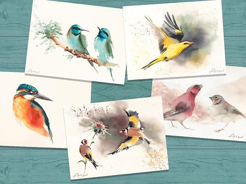 ציפורי ישראל - הדפסים קטנים