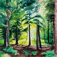 British Forest