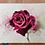 Thumbnail: ורד של גדי Gadi's rose