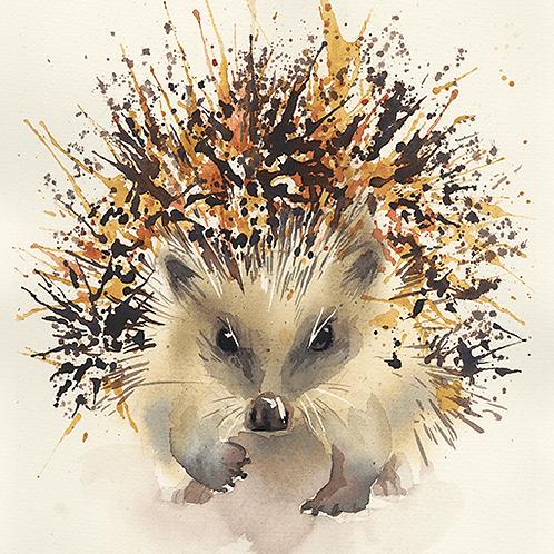 קיפוד מצוי - הדפס גדול Hedgehog - large print