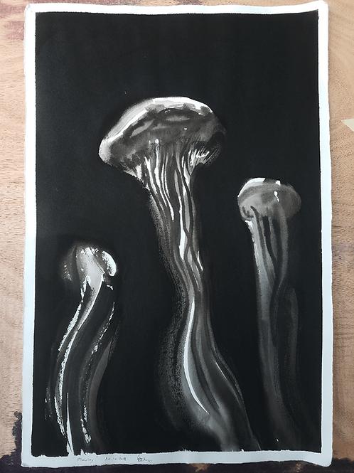 מדוזות Jellyfish