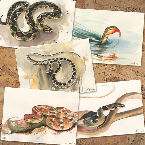 Snakes - 18X13 cm prints