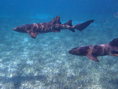 Snorkeling and Scuba Diving