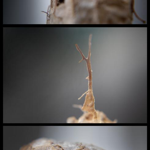 final sequence.jpg