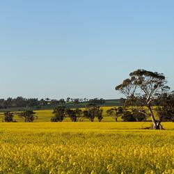 Endless yellow