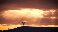 Sun beams over one tree hill