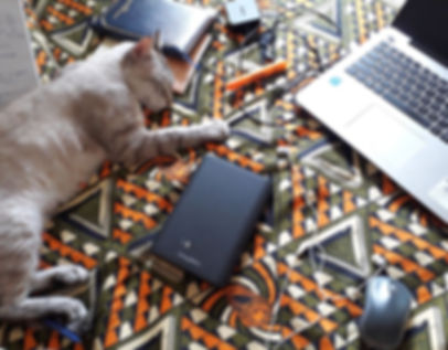 Cat and laptop working hard