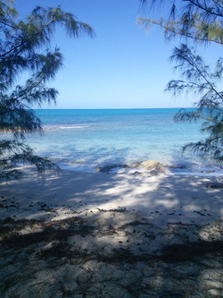Pine trees at quiet beach spot