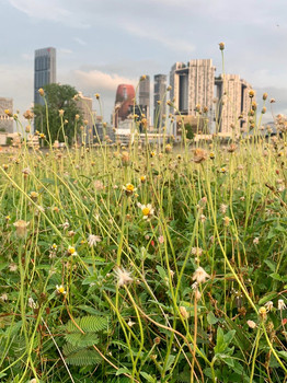 Moving towards City in Nature: are we ready for a beautiful 'mess'?