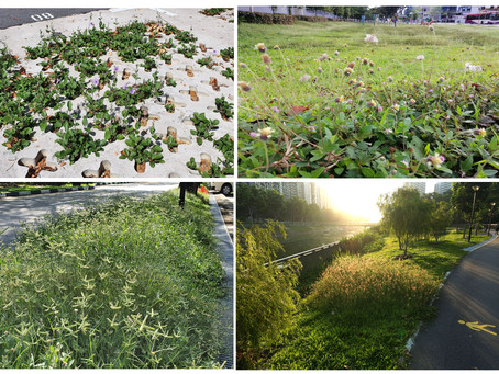 Rethinking The Manicured Green Spaces Amid Lockdown