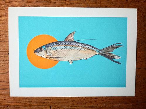 Curious Fish Print - A4