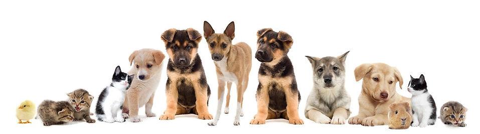 Pet Medication, Animal Medication, Meds for Pets, Vet care