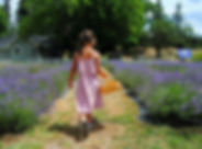 Lavender+Fields+Forever+50.jpg