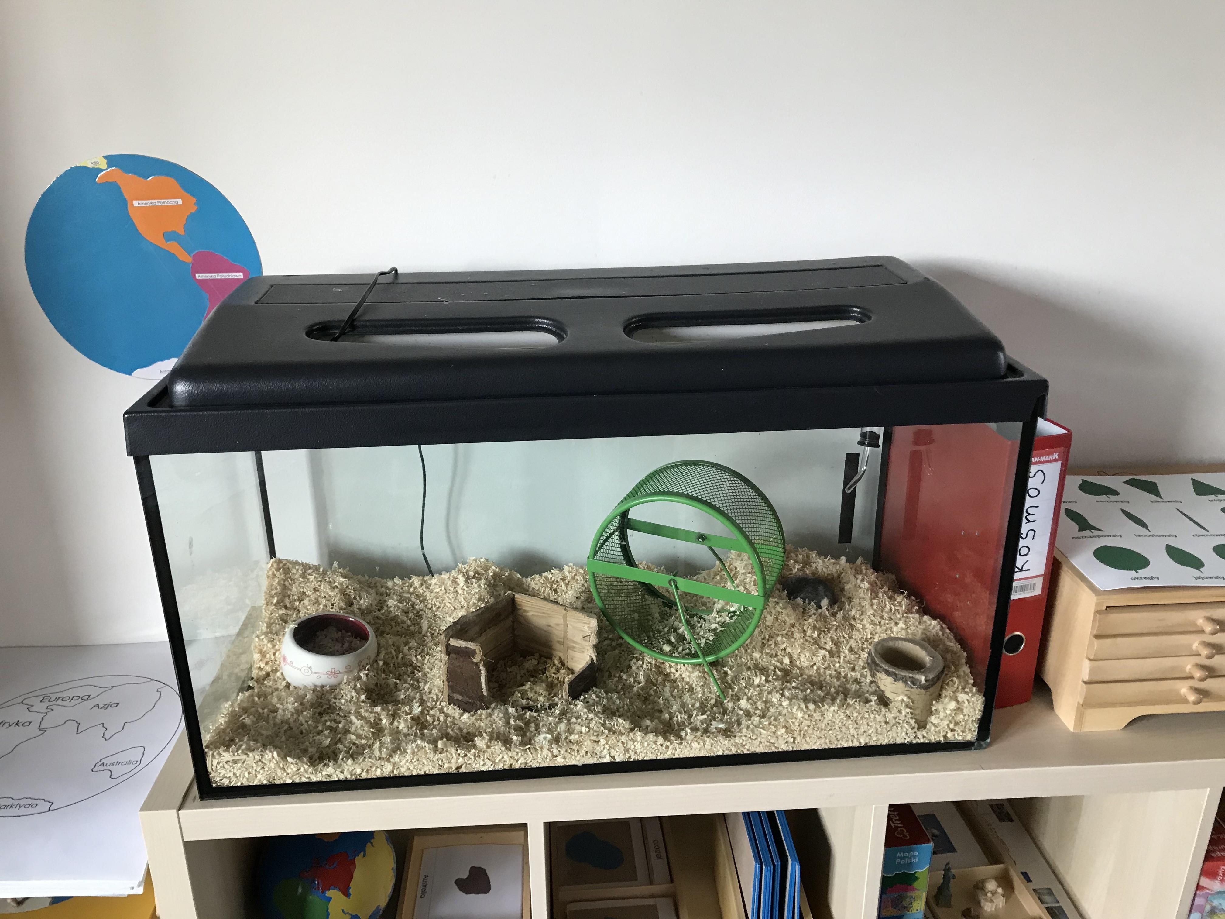 Sala grupy I zwierzątko