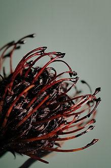 Simones Photographie fleurs