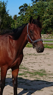 Få muskler på din hest
