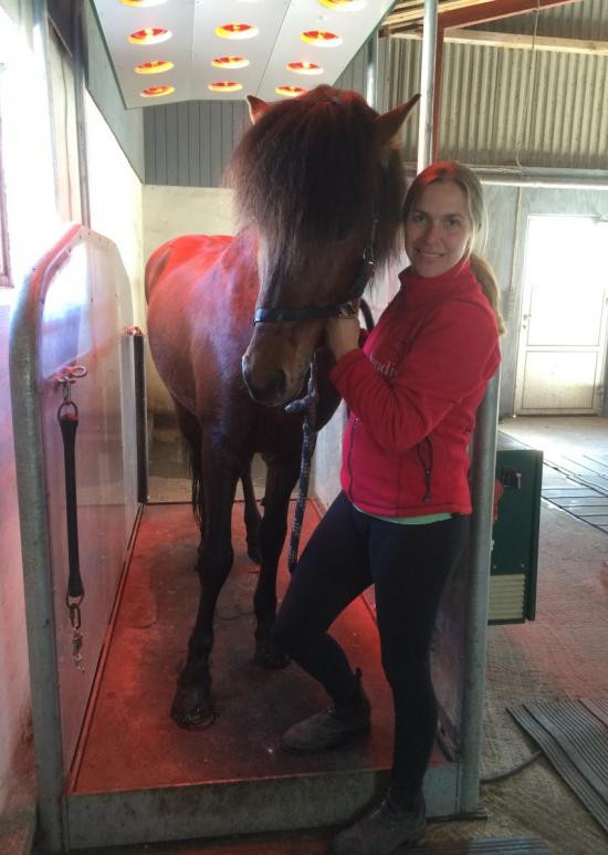 Horse Trainer Relax
