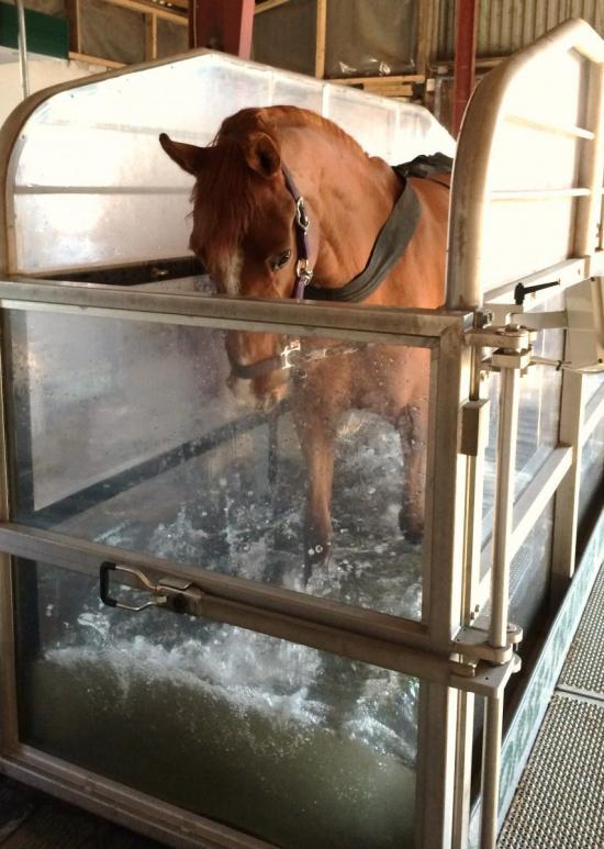 Healthy Horse Bornholm