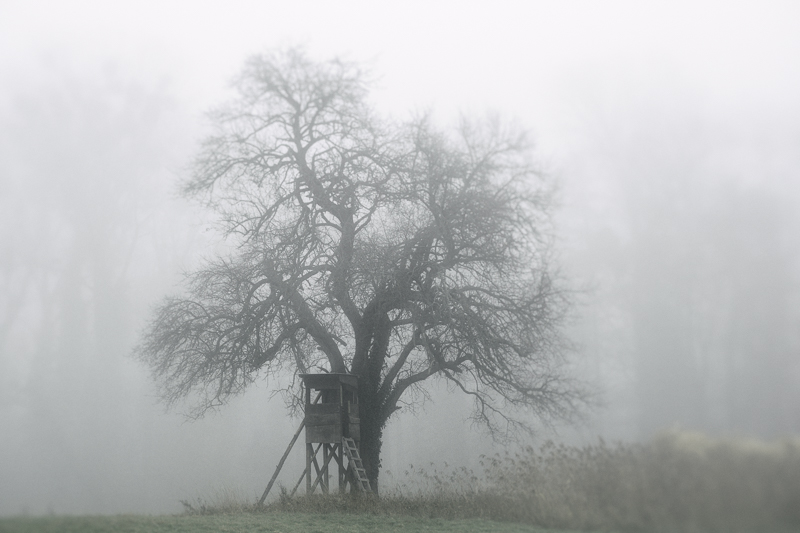Nebellandschaft_SSF_174-Bearbeitet