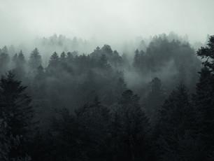 Internationaler Tag des Waldes 2021