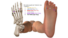 """L'évolution du test des """"6 joyaux"""" (6 Axes ou 6 Couches) dans notre formation acupuncture."""