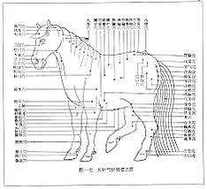 Formation Acupuncture vétérinaire Pole de Therapeutes