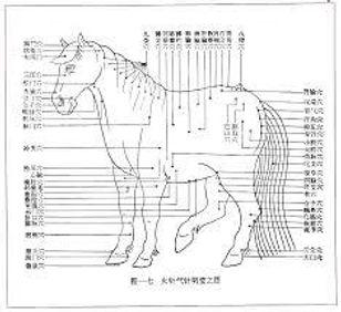 Formation Acupuncture vétérinaire Pole d