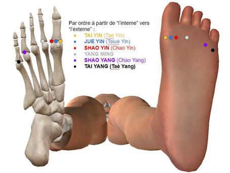 """Une évolution du Test des """"6 Joyaux"""" lors de la Formation Acupuncture."""