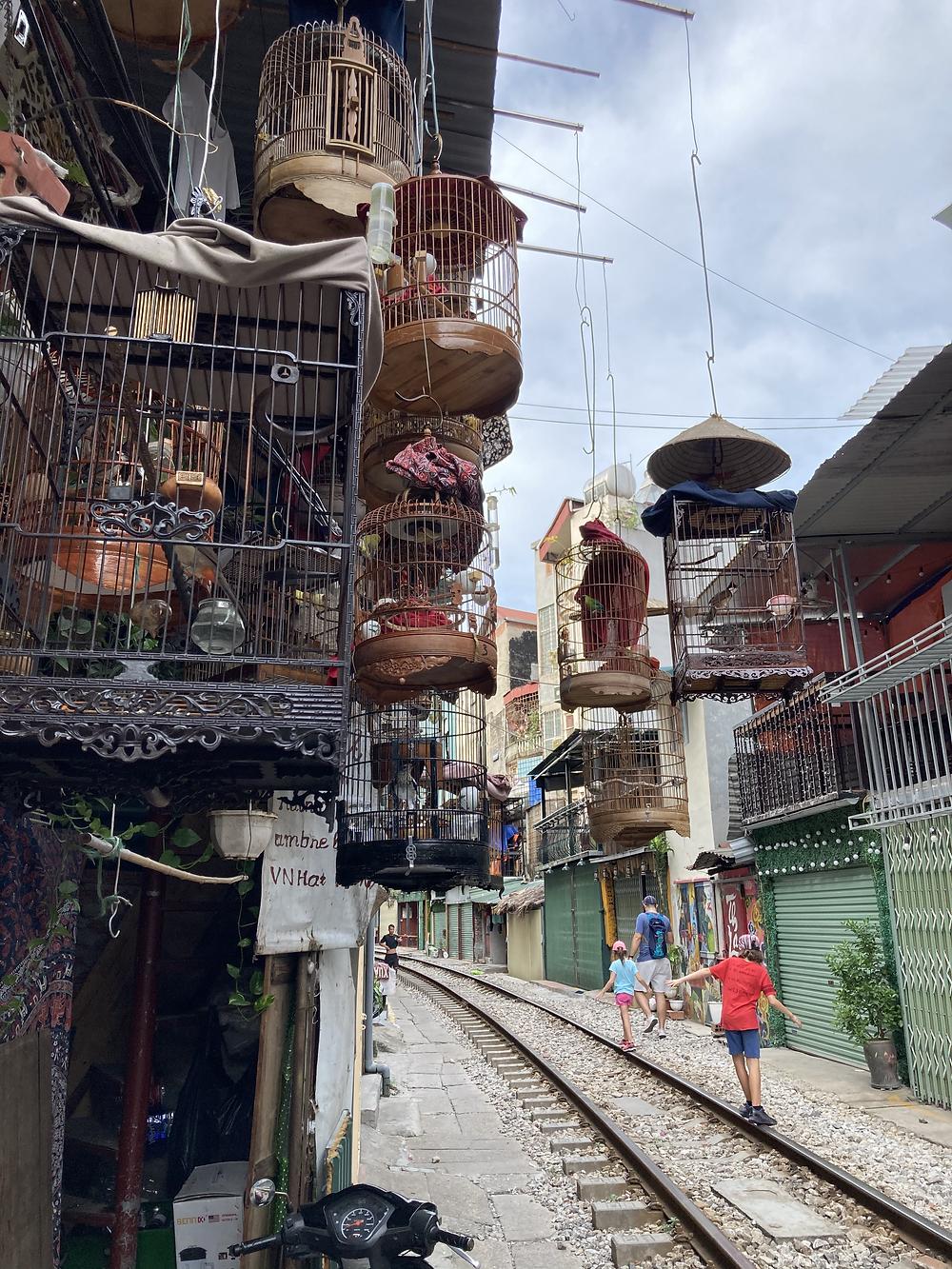 Songbirds in cages in Hanoi