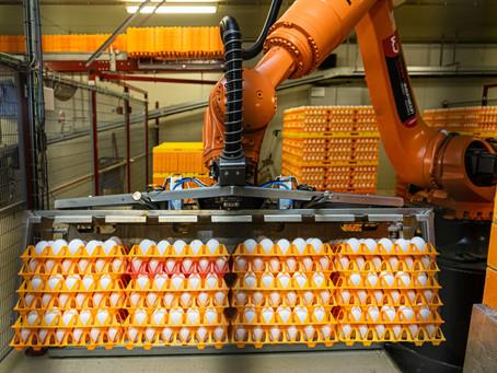 Optimalisatie eierrobot samen met Meggson