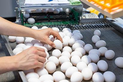 Salomons Groep Dronten 108 Eieren pluimv