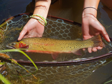 5 Tips on Good Fish Handling, C&R
