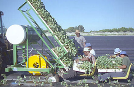 Kennco Water Wheel Transplanter.jpg