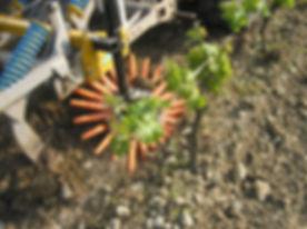 Kult Kress Fingerweeder Vineyard 1.jpg