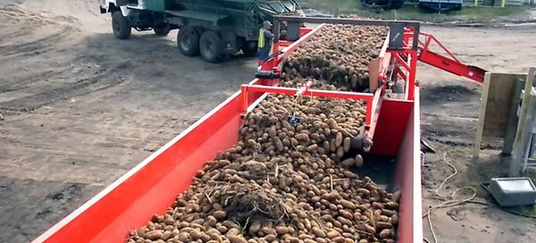 Convoyeur et trémie Mayo Potato Surge