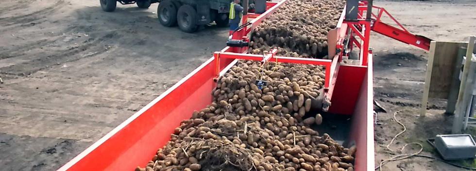 Mayo Potato Surge Conveyor and Hopper