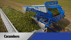 Crop Shuttle Cucumbers